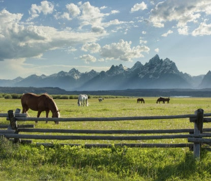 Horses Grazing Grand Teton mountains
